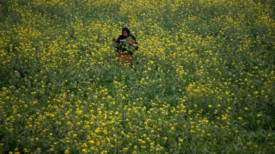 Mulher durante colheita de folhas de mostarda em Lahore, Paquistão