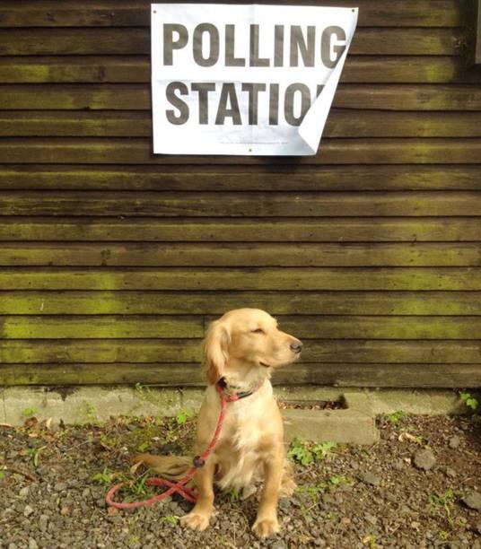 Cachorro durante a votação do referendo, no Reino Unido