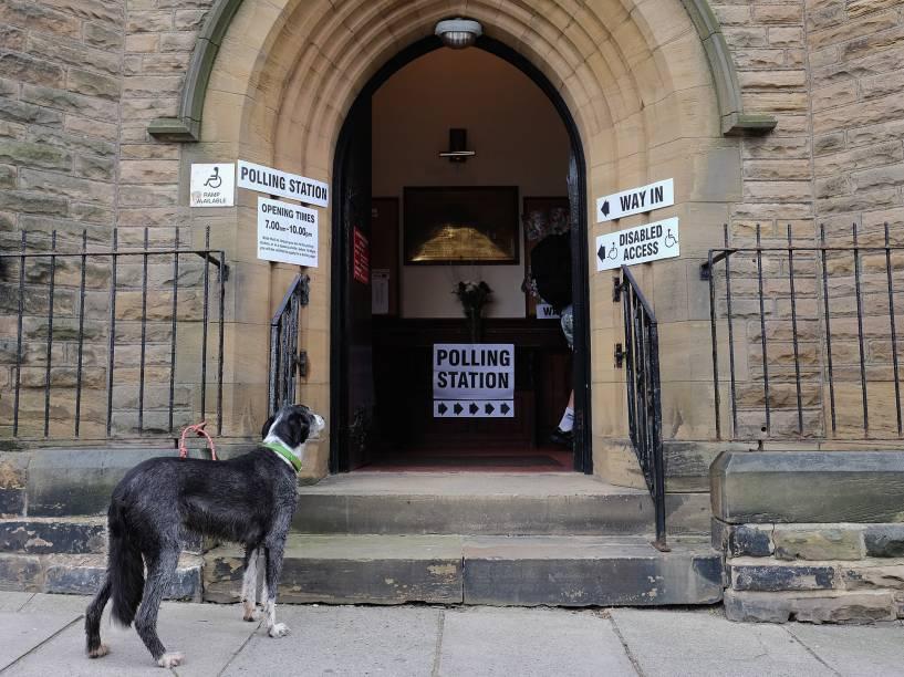 Cachorro aguarda do lado de fora de uma zona eleitoral, no Reino Unido