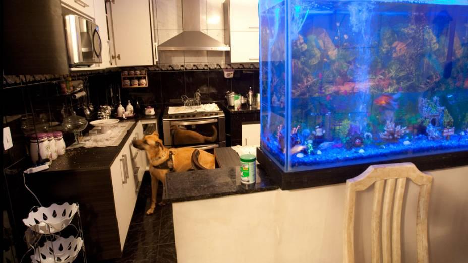 Cães farejadores da PM vasculham interior da mansão do traficante Peixe, no Rio de Janeiro - 13/11/2011