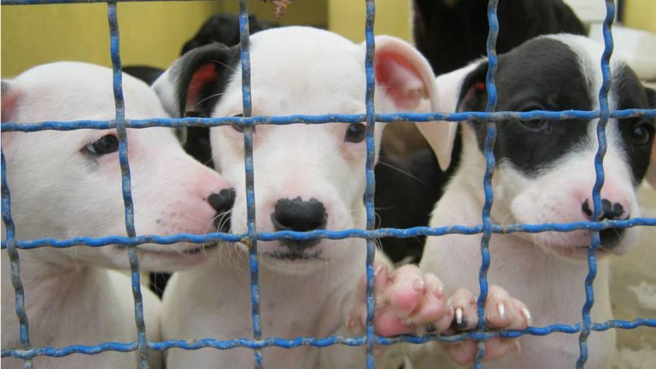 Há casos de cadelas que deram à luz em situações de abandono e maus tratos e foram parar no abrigo com os filhotes