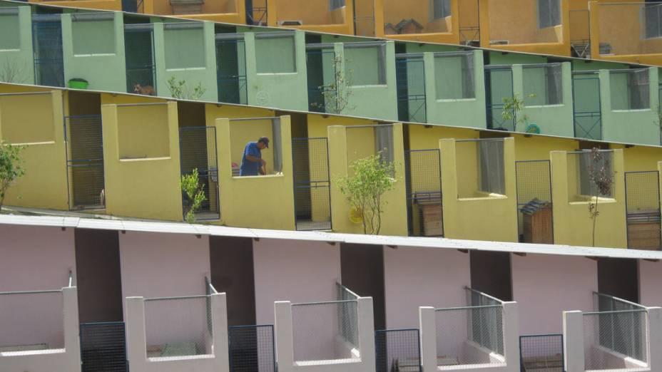 Cerca de 500 cães vivem no lar transitório da ONG