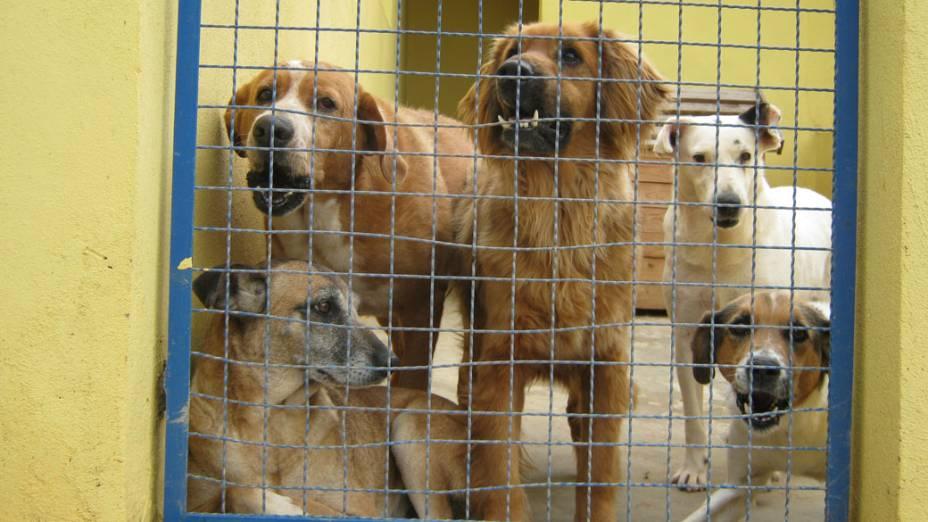 Os cães que vivem no lar transitório da ONG passam por um período de reabilitação de três meses, em média. Depois são levados para feiras de adoação
