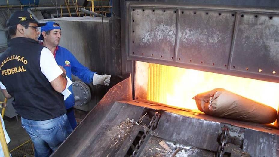Fiscais do Ministério da Agricultura, Pecuária e Abastecimento, queimaram leite em pó, produzidos a partir de leite cru onde foi detectada a presença de formol