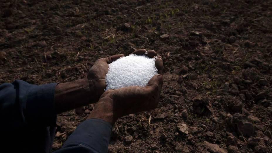 Mãos de fazendeiro com fertilizante antes de preparar a terra para cultivo em Multan, Paquistão