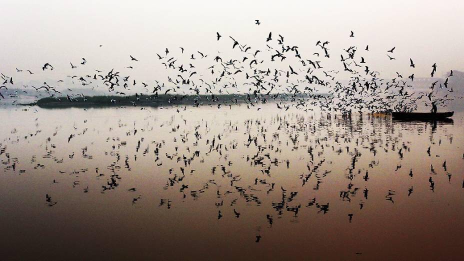 Pescador indiano alimenta pássaros no rio Yamuna, em Nova Délhi