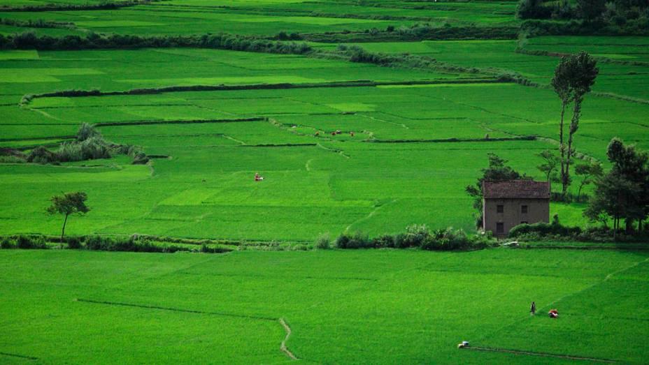 Agricultores em arrozal na cidade de Khokana, no Nepal
