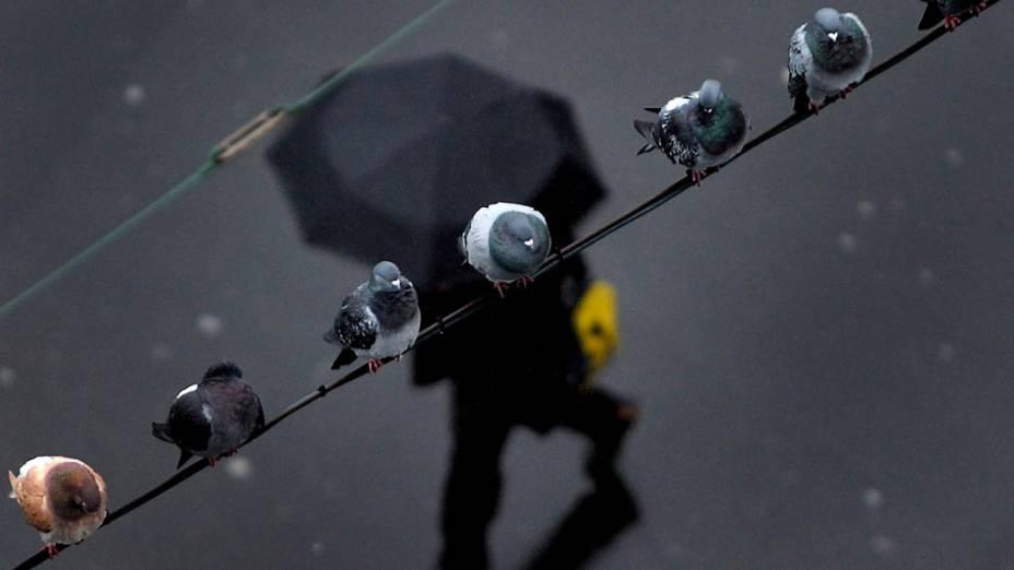 Pombas em fio na cidade de Duesseldorf, Alemanha