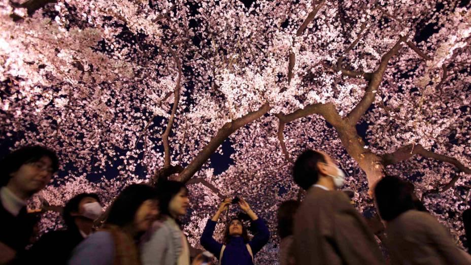 Mulher tira fotografia de cerejeira, no início da primavera no Japão