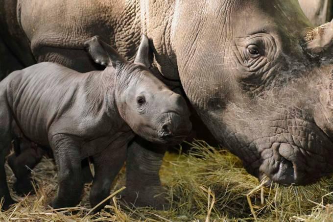 rinoceronte-parque-alemanha-20110222-original.jpeg