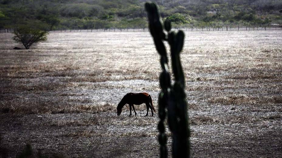 A Bahia enfrenta a pior seca dos últimos 47 anos. Na foto, vista da seca em São José, no distrito de Feira de Santana