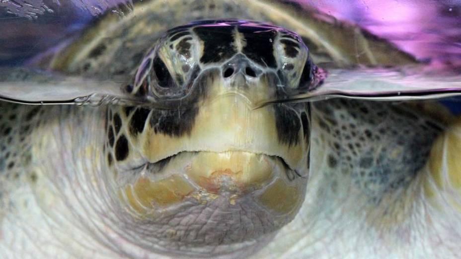 Tartaruga marinha em aquário de Oberhausen, Alemanha