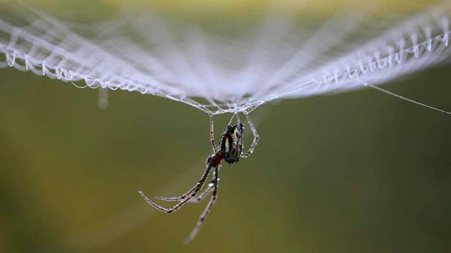 Orvalho em teia de aranha durante a manhã em Lalitpur, no Nepal