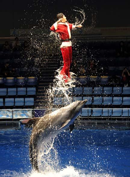 """Treinador aquático com vestes de Papai Noel se apresenta com golfinhos no """"Aqua Stadium"""" em Tóquio, Japão"""