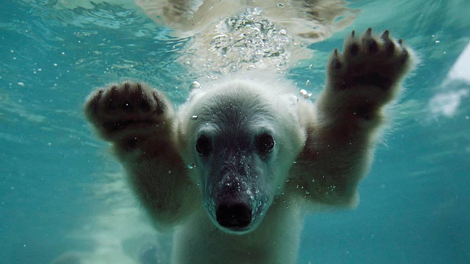 A pequena filhote de urso polar batizada de Anori foi fotografada nesta quarta-feira em sua ala no zoológico de Wuppertal, na Alemanha