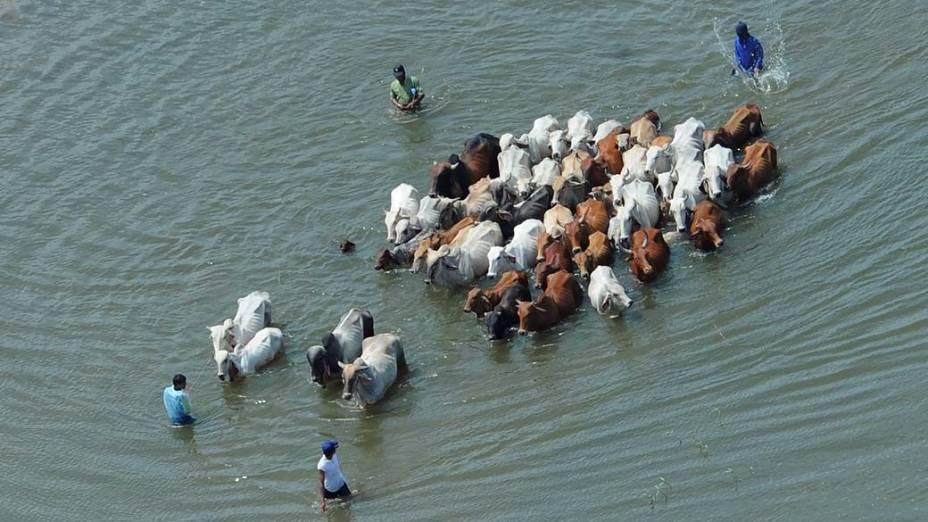 Homens conduzem rebanho de vacas em área alagada em Ayutthaya, Tailândia