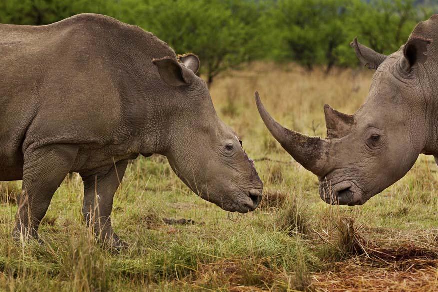 """Brent Stirton, da África do Sul, ganhou o 1º lugar na categoria """"Nature Stories"""", da premiação """"World Press Photo Award"""", com essa imagem de rinocerontes em guerra na reserva de Tugela, em Colenso (África do Sul)"""