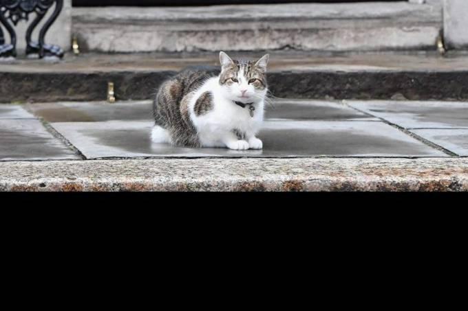 alx_larry-the-cat-20160627-010_original.jpeg