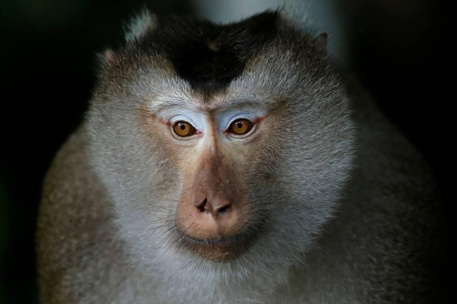Macaco é visto descansando em uma árvore do Parque Nacional Khao Yai, na Tailândia - 19/07/2016