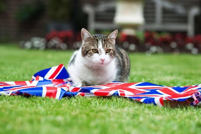 Larry: O gato oficial da 10 Downing Street, residência oficial do primeiro-ministro britânico