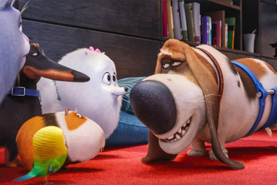 Os pets Chloe, Gidget e Buddy conversam na animação Pets - A vida secreta dos animais
