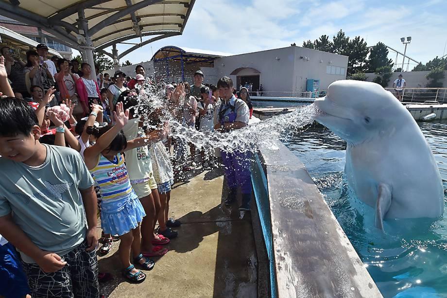 Uma baleia beluga espirra água em crianças durante uma atração de verão em um parque aquático de Yokohama, no Japão