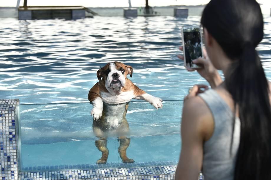 Mulher tira foto de seu cão em uma piscina para cães em Chengdu, província de Sichuan, na China - 16/08/2016