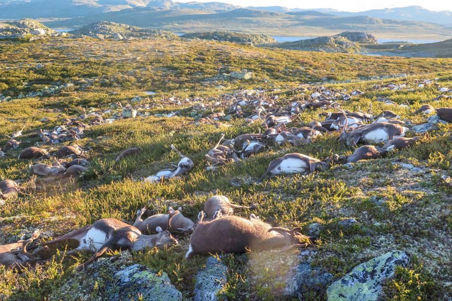 Grupo de veados morrem após serem atingidos por uma descarga elétrica durante tempestade de raios em Hardangervidda, na Noruega - 29/08/2016