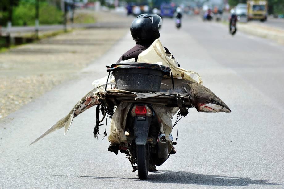 Pescador é fotografado com um tubarão na garupa de sua moto em via de Padang, em Sumatra Ocidental, na Indonésia - 25/08/2016