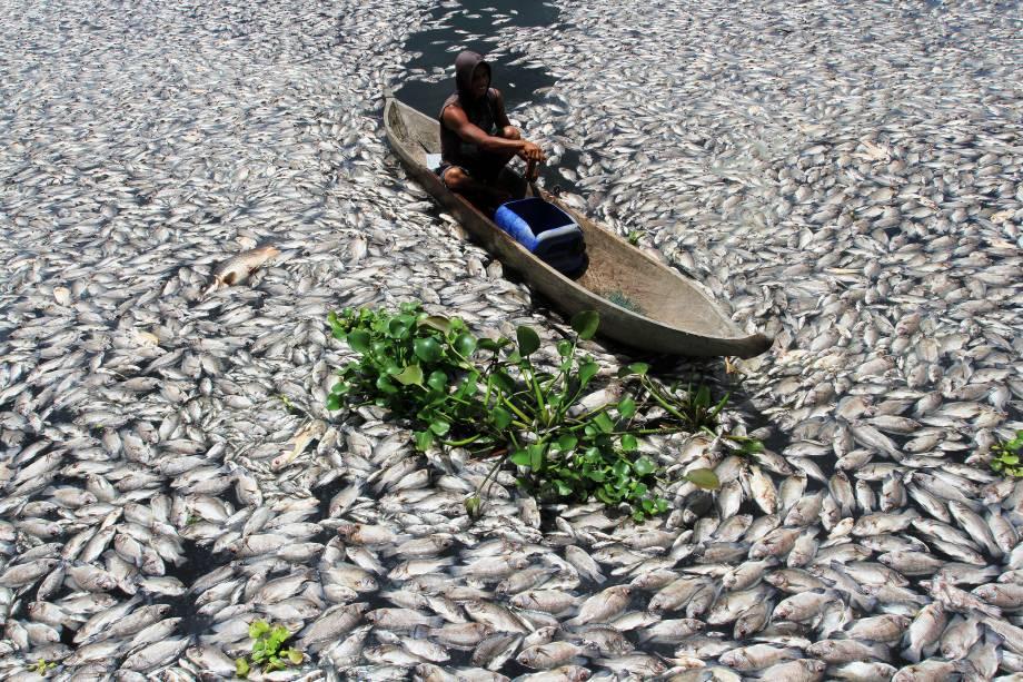 A falta de oxigênio na água provocou a morte repentina de centenas de peixes em uma lagoa de reprodução no Lago Maninjau em Agam, na Indonésia - 31/08/2016