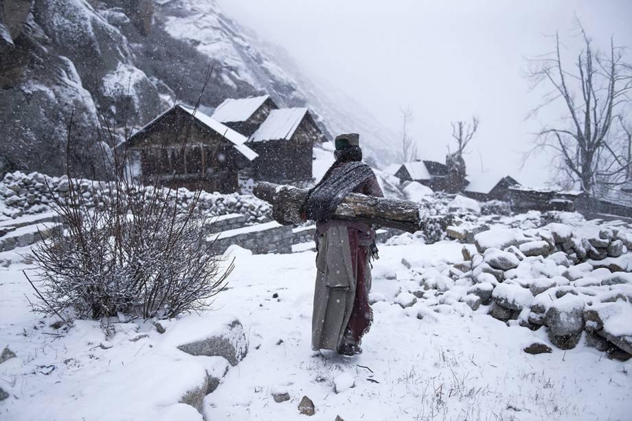 Mulher da tribo Kinnaura é fotografada carregando um grande tronco de árvore nas costas para aquecer sua casa