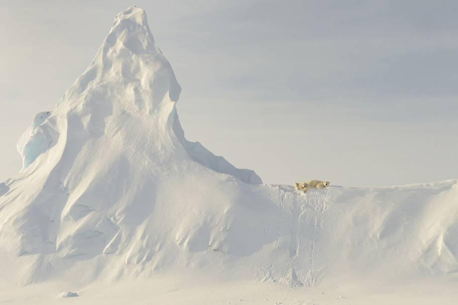 Ursos polares descansam no topo de uma geleira na costa da ilha de Baffin, no Canadá