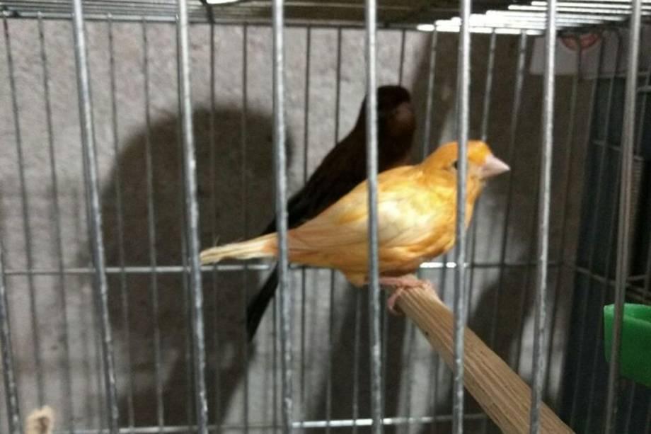 A Polícia Federal encontrou aves de diferentes espécies em condições de maus tratos