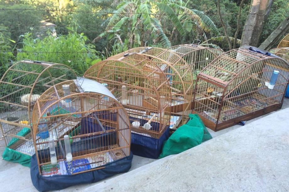 Resgatadas, as aves foram encaminhadas ao Centro de Recuperação de Animais Silvestres, do Parque Ecológico do Tietê