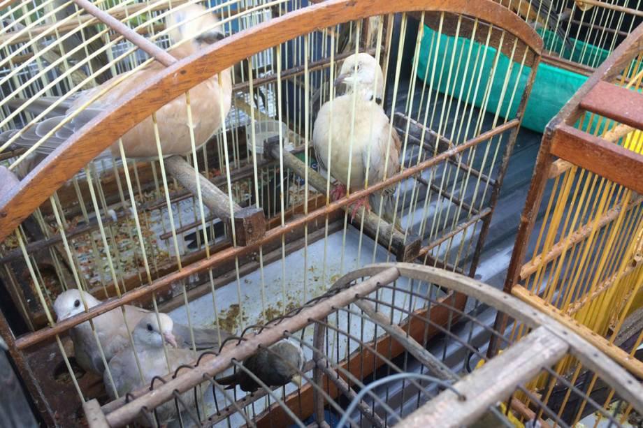 A PF decidiu realizar a ação nesta semana para soltar as aves antes da Primavera, estação de reprodução das espécies
