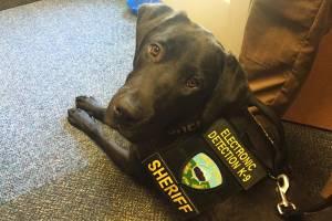 O cão 'URL', especializado em 'farejar pedófilos'