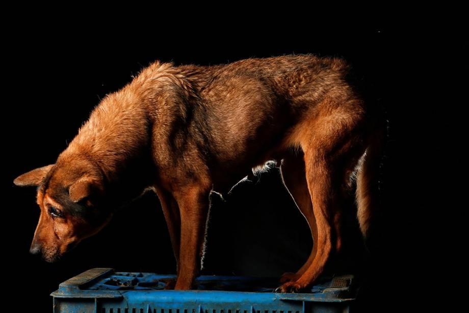 Cachorros do abrigo Famproa, localizado em Los Teques, na Venezuela