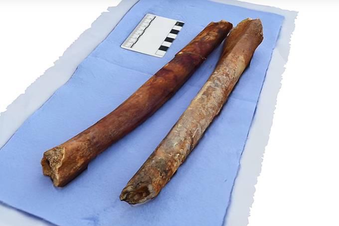 Esqueletos descobertos na Ilha de Anticítera, na Grécia