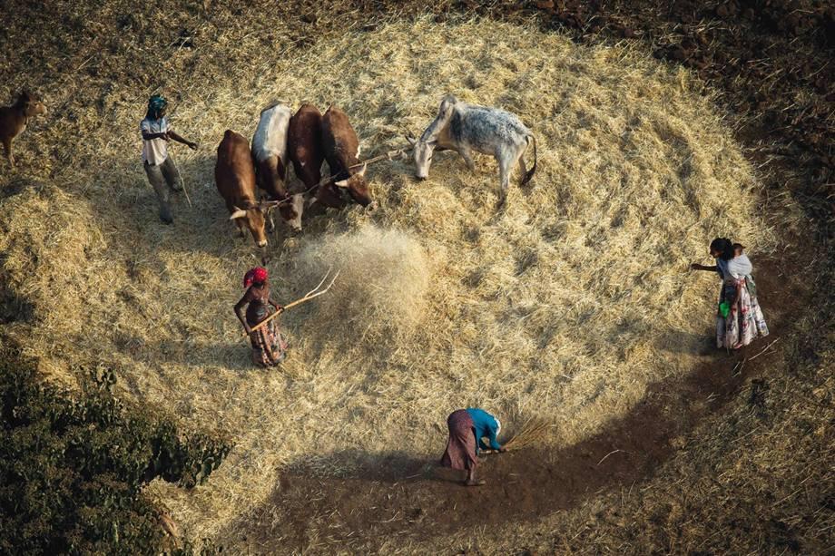 Colheitas na região de Tigré, na Etiópia