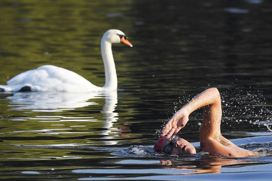 Homem nada próximo de um cisne no Lago Serpentine, em Londres, na Inglaterra - 15/09/2016