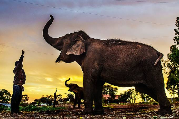 paraguacu-elefantes