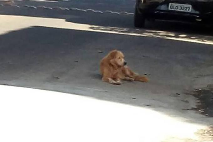 Cão fica em frente de uma residência onde foi abandonado em Macapá (AP)
