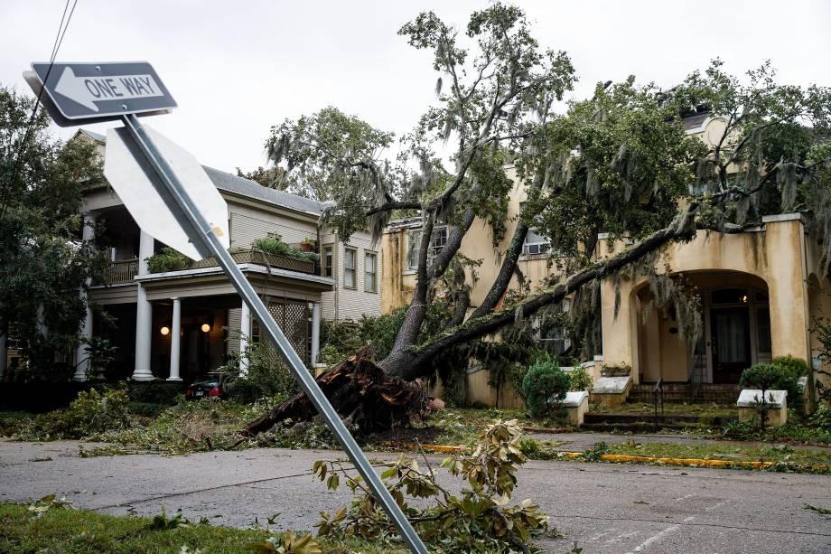 Árvore derrubada após passagem do furacão Matthew  em Savannah, no estado americano da Georgia - 08/10/2016