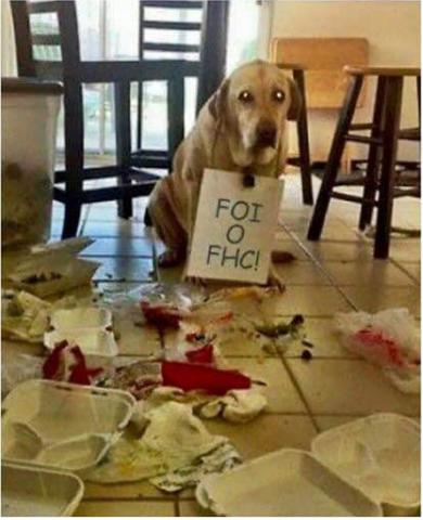 cachorro culpa FHC