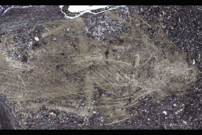 Fóssil de 300 milhões de anos de espécie de barata