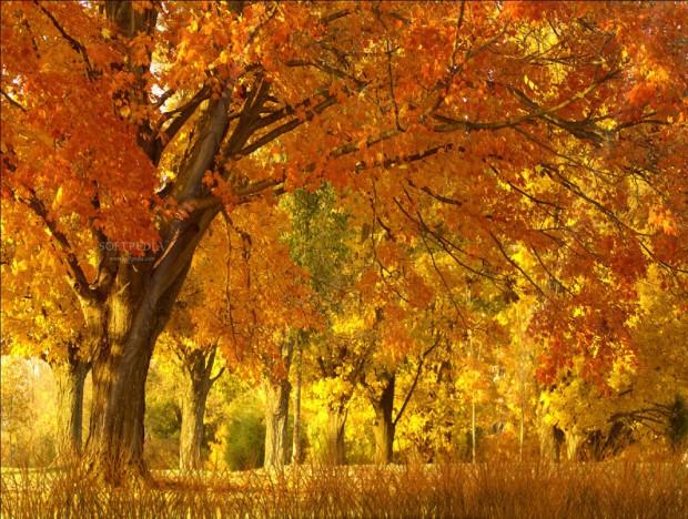 Fall Season3