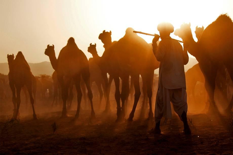Comerciante orienta camelos que serão vendidos no estado de Rajasthan, na Índia - 07/11/2016