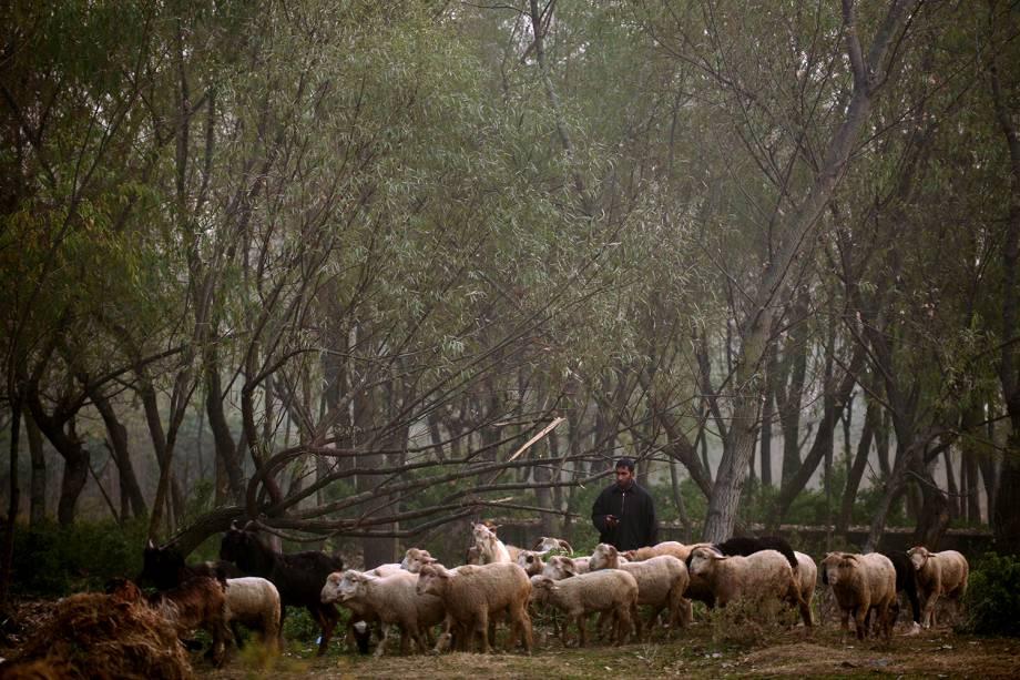 Pastor conduz gado em meio a uma floresta, em um dia frio de inverno na região do Srinagar, Caxemira, na Índia - 23/11/2016