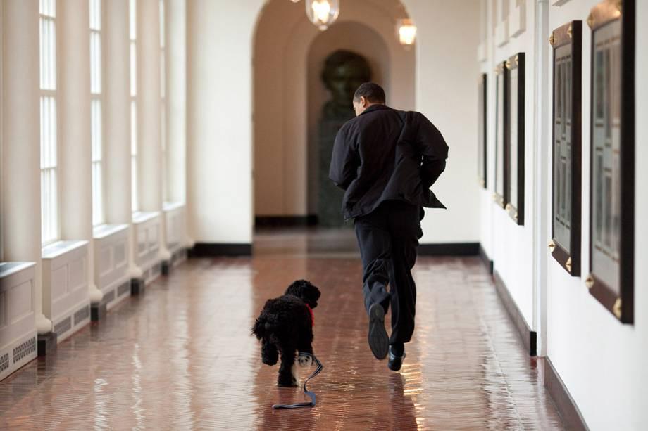 Presidente Obama brinca com cachorrinho Bo, logo antes de ser adotado pela família - 15/03/2009