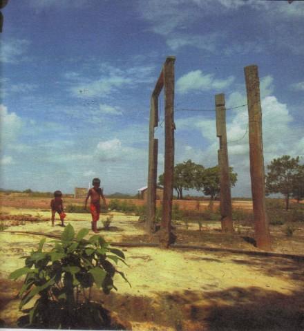 Poesia de Ayres Britto, com apoio de maioria do Supremo, tornou deserto um campo de arroz. Resultado dos versos: fome, miséria e migração